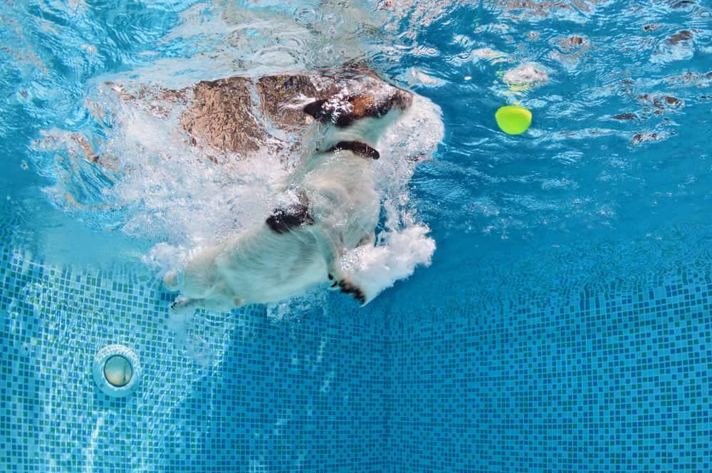 unterwasser fotoshooting hund